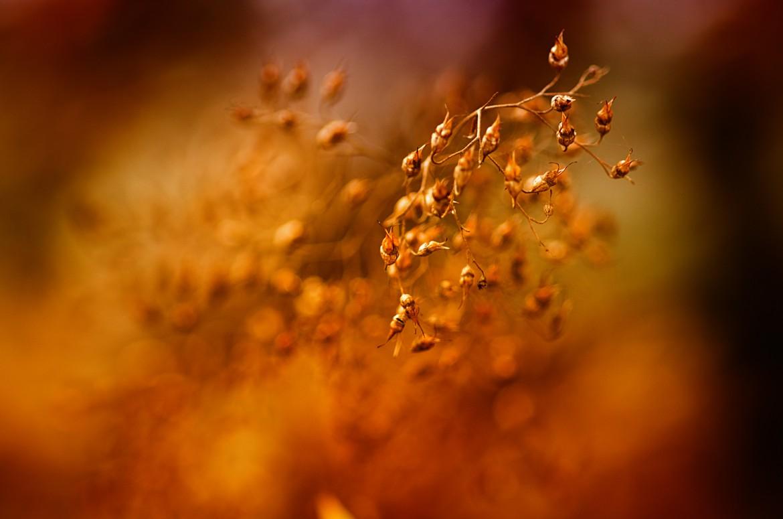 Vertrocknete Knospen im Herbst