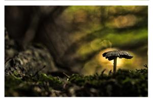 Ein einsamer Pilz im Gegenlicht